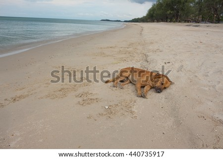 dog sleeping  the beach  relaxing on sand at seaside in summer vacation holiday