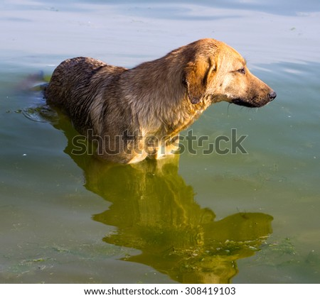Dog standing in sea water