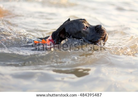 dog swimming in the river