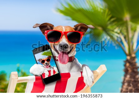 dog taking a selfie in summer holidays