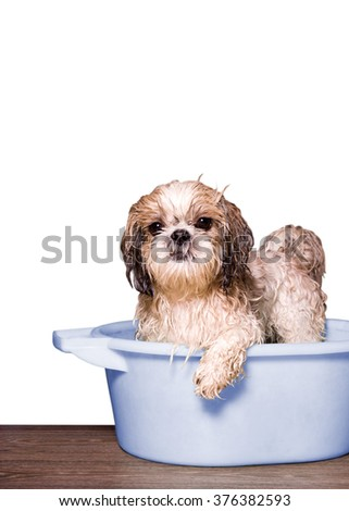 dog wash in a basin. white background