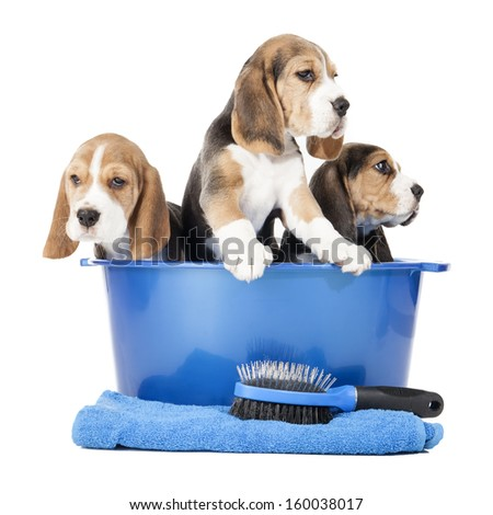 Dog washing in a basin isolated on white background in studio