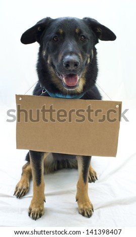Dog wears a sign, ready for custom message