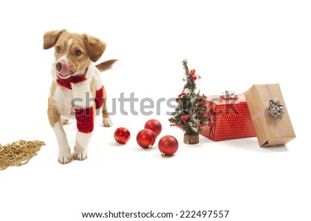 Dog with christmas decoration.
