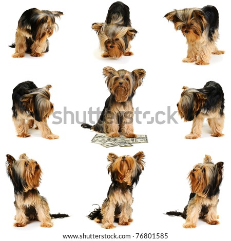 dog with dollars  on the white background