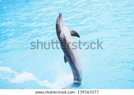 Dolphin dancing during dolphins show