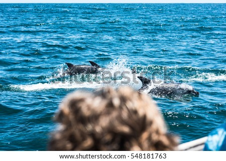 Dolphin family playing in the water in South Africa while being watched from a boat
