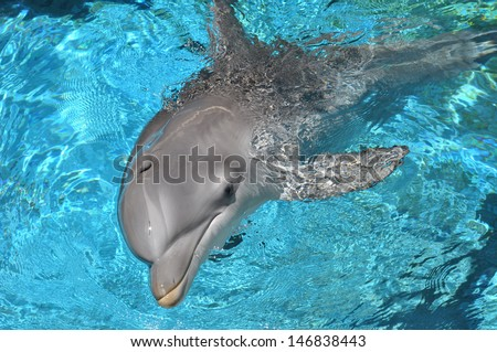Dolphin swimming in water looking at camera