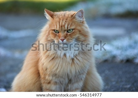 Domestic cat in the garden