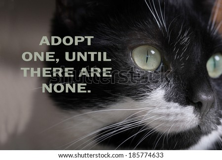 DOMESTIC STRAY CAT ADOPTION POSTER.  Can be used for animal charity and shelter to help find lost and stray cats new homes.