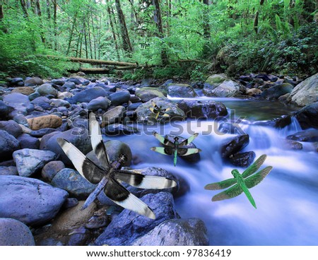 Dragonflies in flight above creek or mountain stream in deep woods