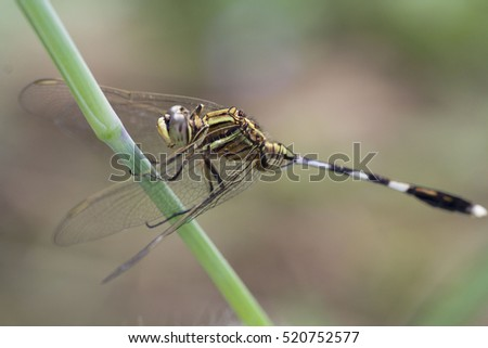 Dragonflies, insects, animals, nature, macro Dragonfly - focus on the eye