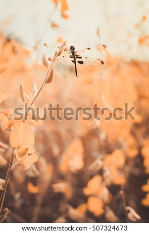 dragonfly and leaves in a fall season, sunset time, soft focus and blurred background