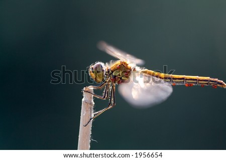 Dragonfly on blade