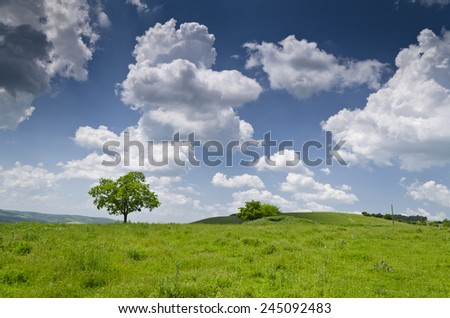 Dramatic Blue Sky, Meadow and a tree near the village Katselovo