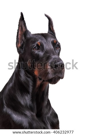 Drawing Doberman dog portrait on a white background
