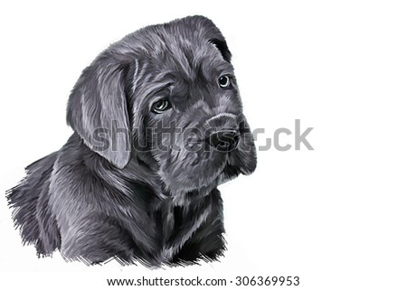 Drawing dog breed Cane Corso puppy, portrait oil painting on a white background
