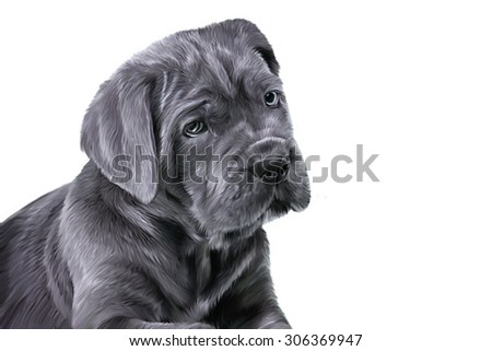 Drawing dog breed Cane Corso puppy, portrait on a white background