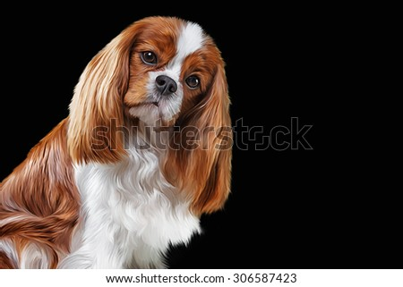Drawing dog Cavalier King Charles Spaniel, portrait on a black background