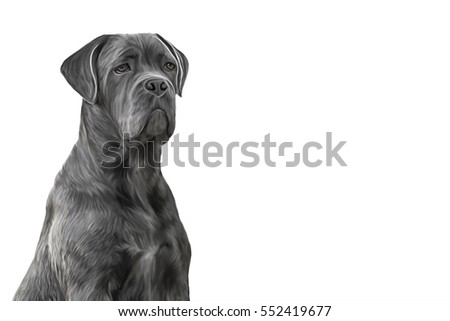 Drawing, illustration dog breed Cane Corso portrait oil painting on a white background