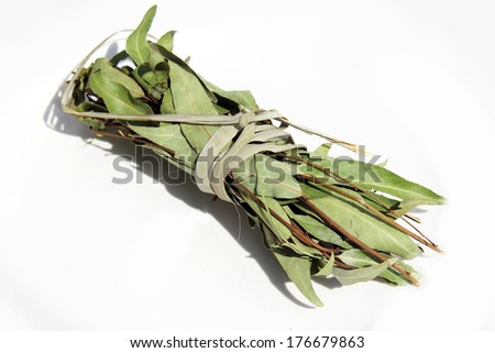 Dried laurel bay leaves in bundle isolated
