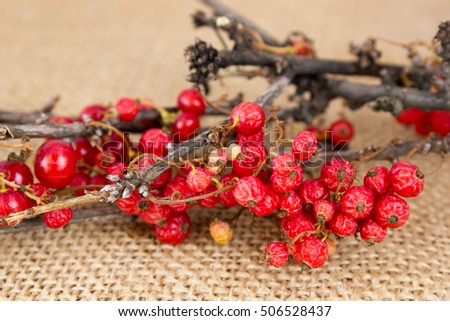 Dried red currant on the burlap