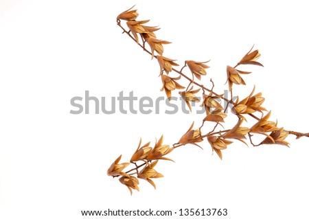 Dried wild fruits on a white background