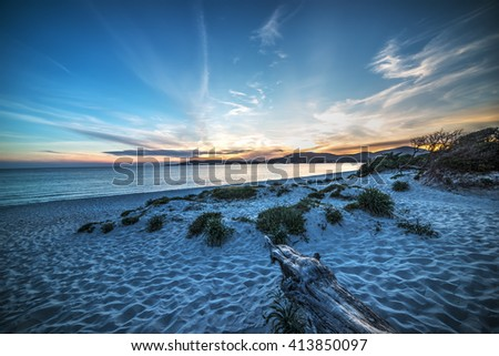 driftwood on the beach at sunset in Sardinia, Italy