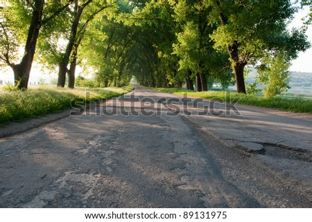 Drill asphalt road surrounded by trees