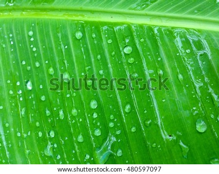 Drops of water on green leaves in summer.