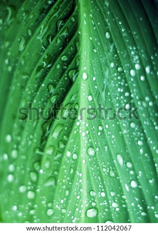 drops on plant