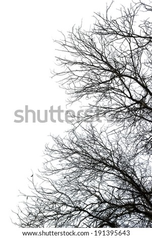Dry death tree isolated on white background