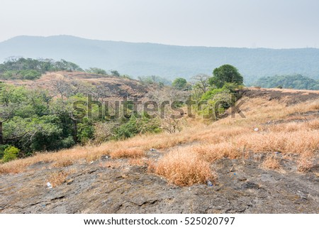 Dry grass with green tree in autumn on the top of mountains with black rock land forms of Sanjay Gandhi National Park, Mumbai, India