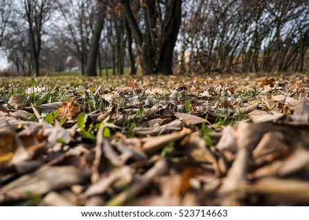 Dry leaves on the field