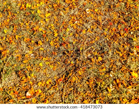 Dry orange and red leaves has fall on floor cause high temperature in summer