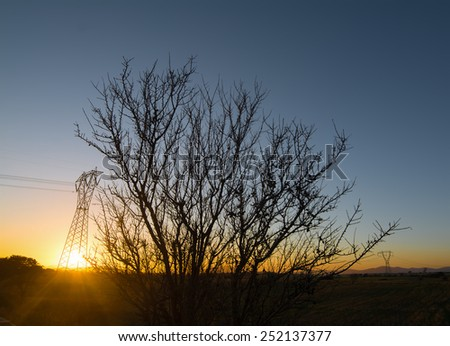 dry tree silhouette in the countryside at sunset