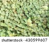 Duckweed in the park pond - stock photo