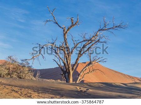 Dunes and dead tree on the Sossusvlei plato of the Namib Naukluft National Park. Namibia, South Africa .