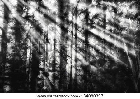 Early Morning light breaking through a forest