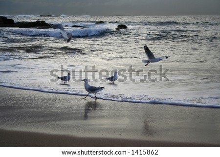 Early morning, seagulls hanging at the beach