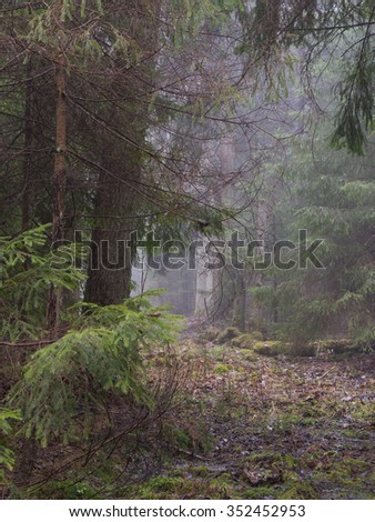 Early spring morning in the forest with mist and old road in mist