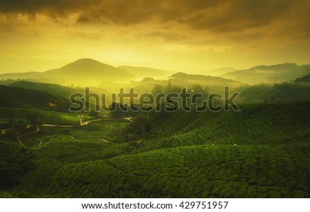 Early warm morning sunrise over hilly tea plantation in Cameron Highlands, Pahang, Malaysia.
