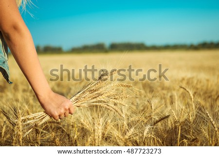 ears of wheat in women's hands on the background of field