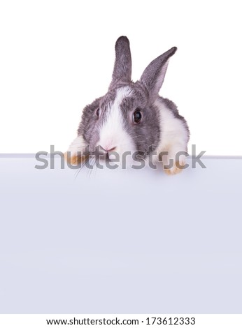 Easter baby rabbit, close-up portrait on a white background