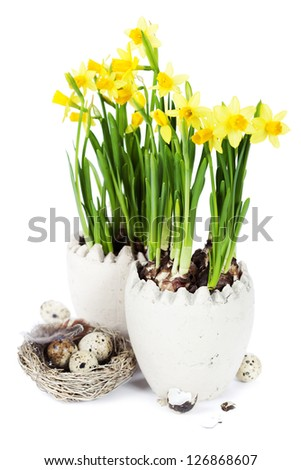 easter composition with eggs and spring flowers on white background