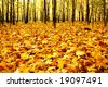 Edge of the forest wilth yellow dead maple leaves - stock photo
