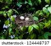 egg bird in bird net - stock photo