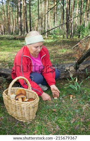 Elderly woman collect mushrooms in forest in September