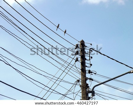 electricity pole line sky power blue bird