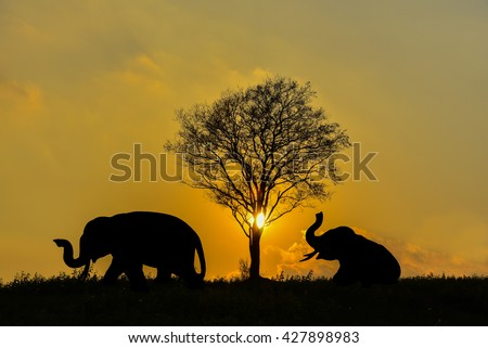 Elephants and tree in sunset